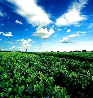 El biodiesel que se consume en Alemania destruye bosques en Argentina y contribuye al cambio climático